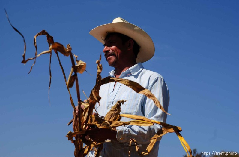 Aniseto Perez Hernandez, 47, harvesting dry corn and at the local church. Hernandez has spent time working in Salt Lake City.; 12.03.2004