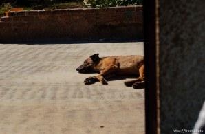 sleeping dog. 12.04.2004