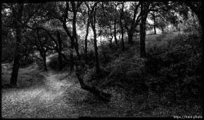 Walking path, trees, San Ramon