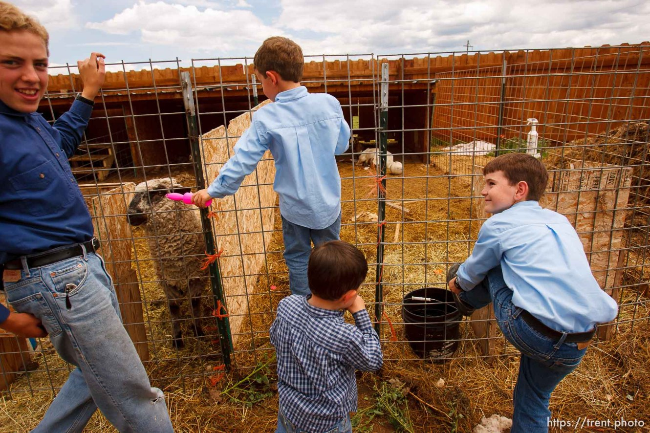 Westcliffe - . Monday, July 28, 2008. boys out with goats