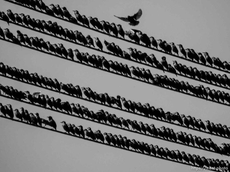 Songbirds, Tuesday September 22, 2015.