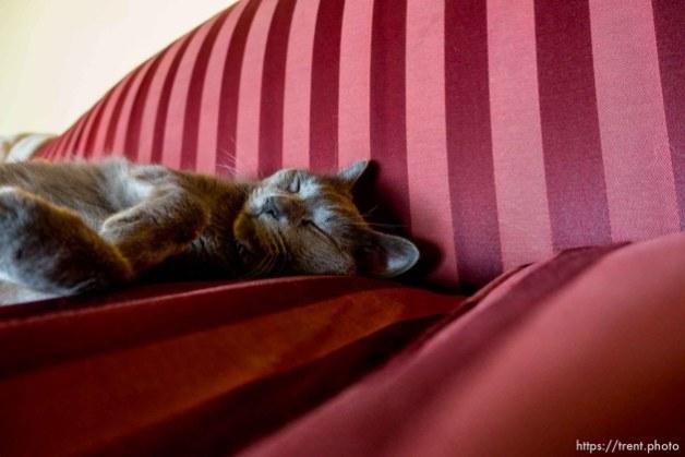 Trent Nelson | The Salt Lake Tribune cat, Finicum, Cane Beds, Saturday May 21, 2016.