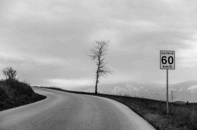 road to bountiful, Monday April 17, 2017. tree