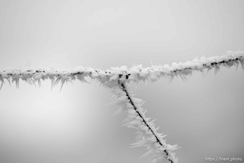 ice on a fence