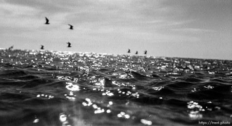 Birds flying over water in ocean