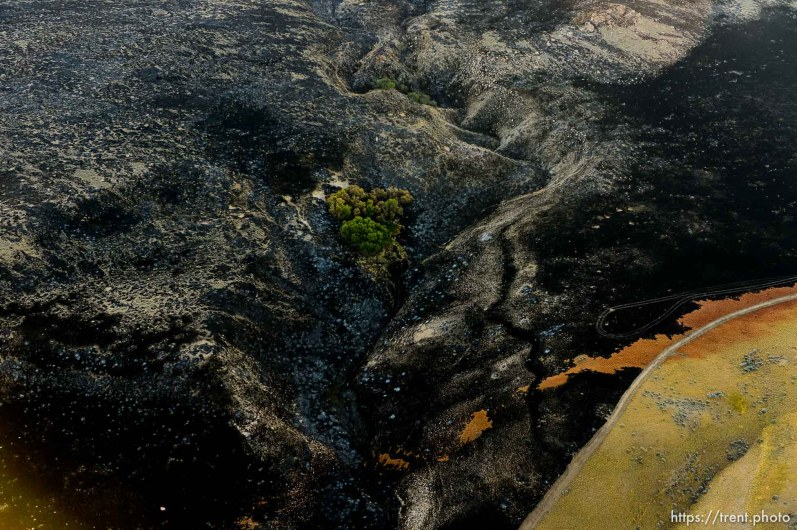 Trent Nelson | The Salt Lake Tribune An aerial view of Antelope Island, showing the scope of the damage caused by a fire that burned up much of the island. Wednesday July 27, 2016, Axiom Aviation.