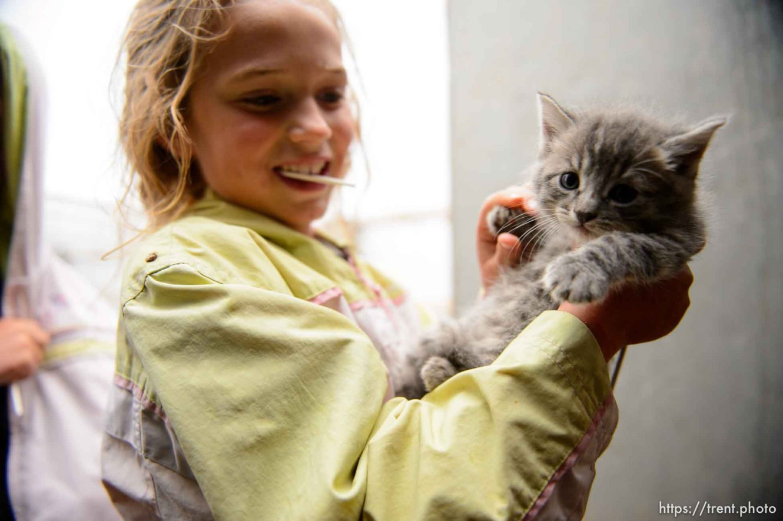 Trent Nelson | The Salt Lake Tribune flds girl with kitten, Tuesday May 9, 2017. cat