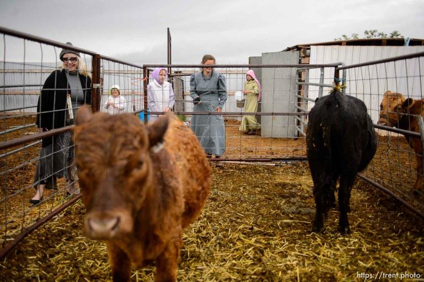Trent Nelson | The Salt Lake Tribune lori barlow with cows, Tuesday May 9, 2017. christine marie katas