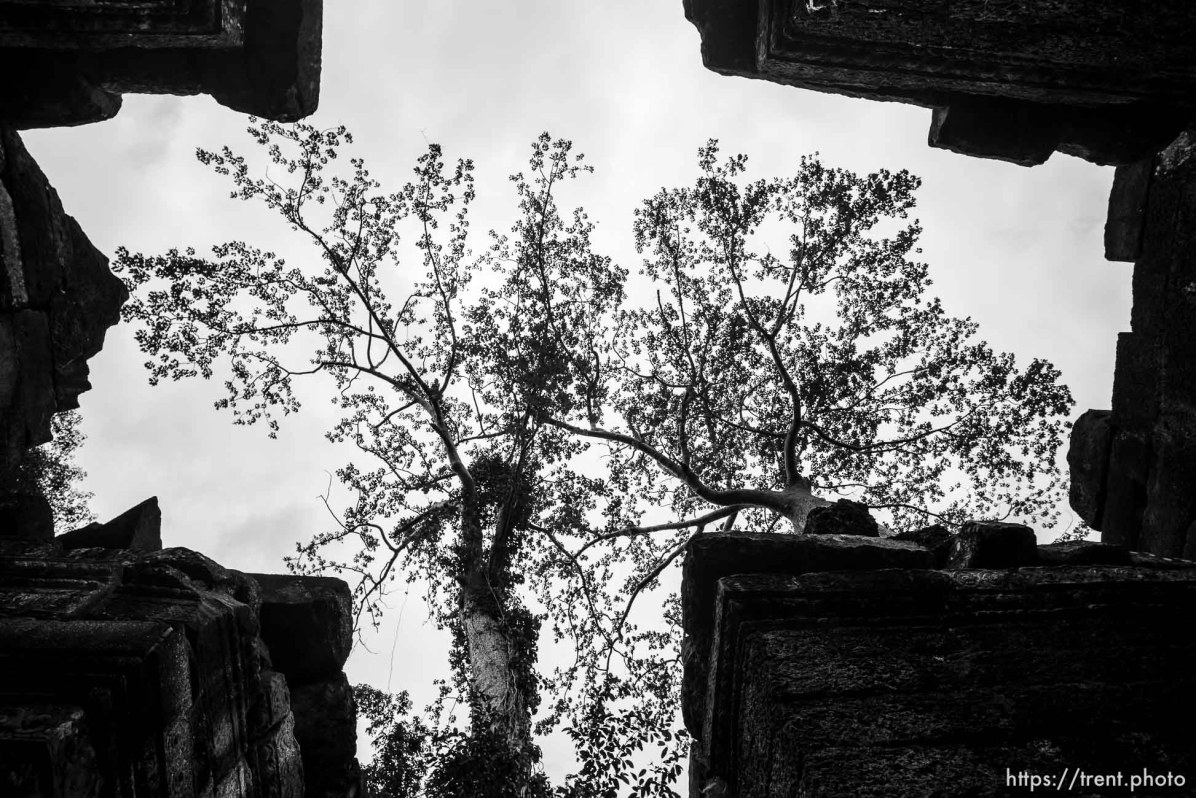 Ta Prohm Temple, August 1, 2019