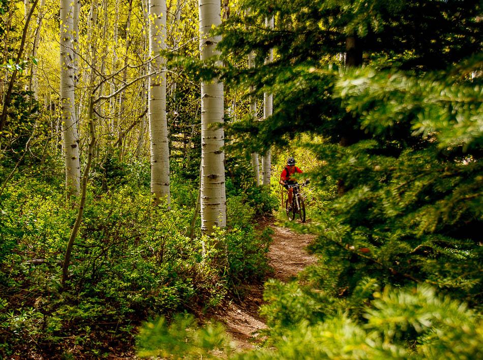mountain biker on Mid-Mountain Trail, deer valley, park city, utah