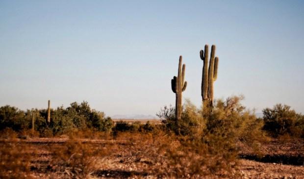 Texas, deserto