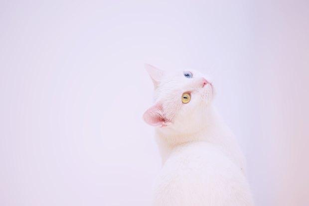 Cat person Roupenian racconti