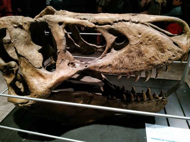 IMG 20190203 WA0023 - Visita a Jurassic World Exhibition en Madrid