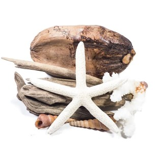 Driftwood coconut and starfish pack