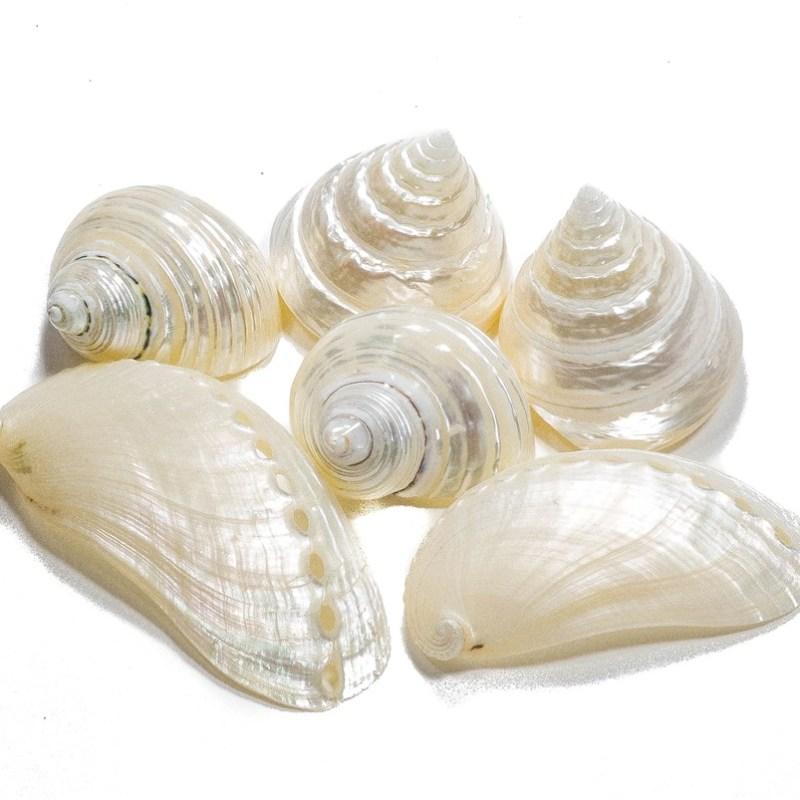Loose shells