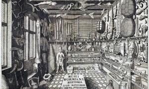 fig.-1-gabinete-de-curiosidades-wikipedia-dominio-publico