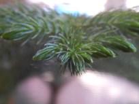 Norfolk Island close-up
