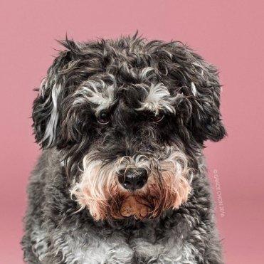 funny-dog-grooming11