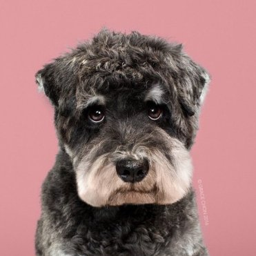 funny-dog-grooming12