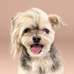 funny-dog-grooming16