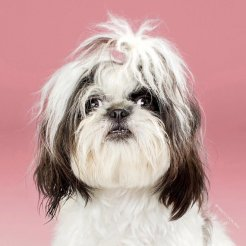 funny-dog-grooming17