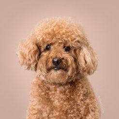 funny-dog-grooming19
