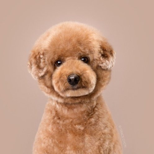 funny-dog-grooming20
