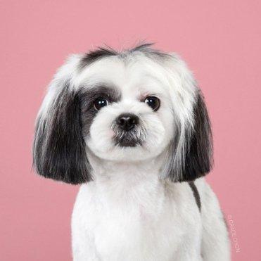 funny-dog-grooming22