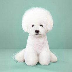 funny-dog-grooming4
