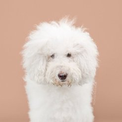 funny-dog-grooming5
