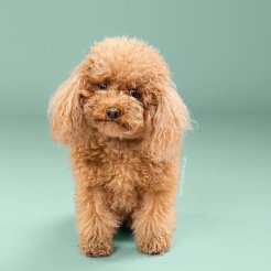 funny-dog-grooming9