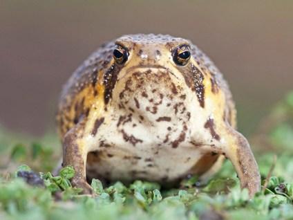 rain-frogs17