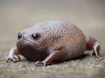 rain-frogs4