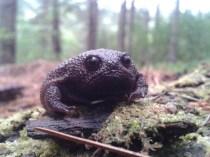 rain-frogs7