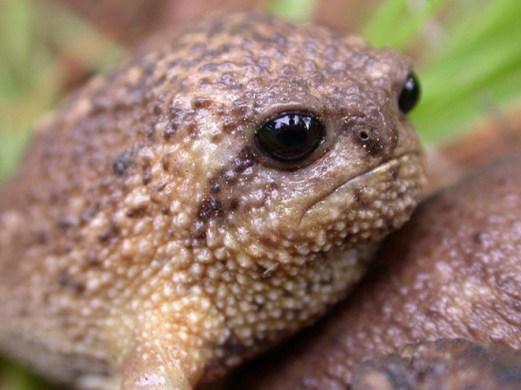 rain-frogs9