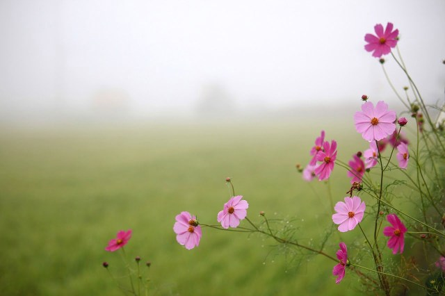 Whamisa, cosmesi coreana, bellezza in viaggio, trevaligie