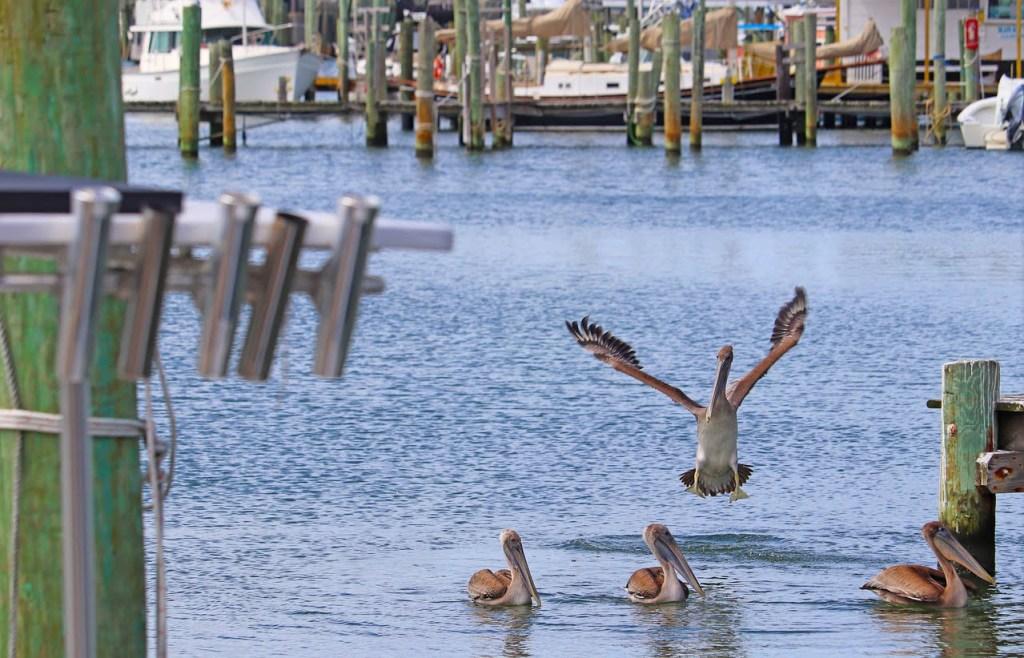 Le Outer Banks sono un vero paradiso, anche per gli amanti del bird wacthing. Isole poco frequentate, di una bellezza selvaggia e sconvolgente.