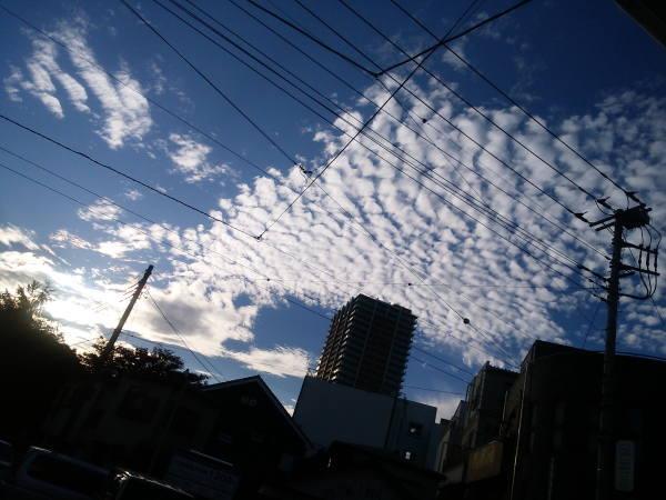 11月3日うろこ雲
