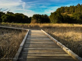 Boardwalk. Miller/Knox Regional Shoreline