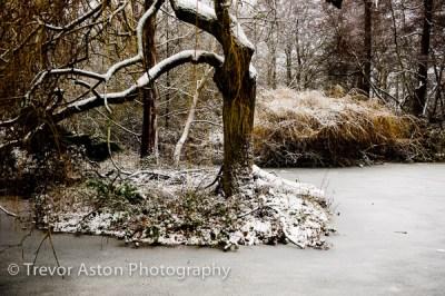 snowy pond Teddington southwest London