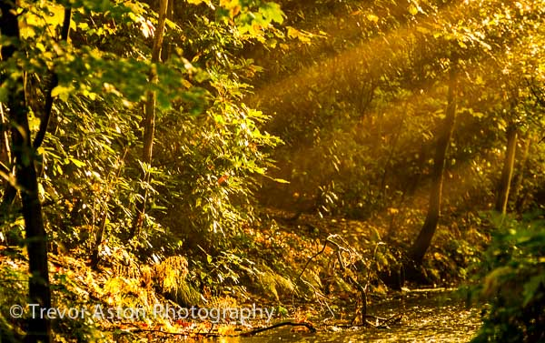 sunbeams in an autumn forest Trevor Aston Photography