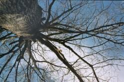 big backyard tree