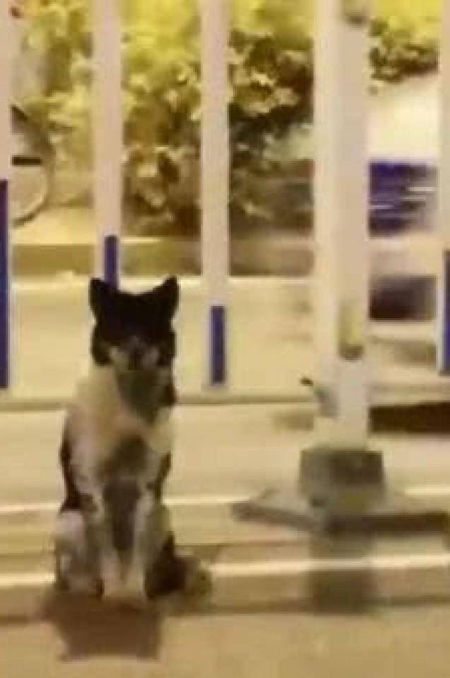 Вярно и предано куче като Хачико от 3 месеца стои на пътя и очаква загиналата си стопанка (СНИМКИ/ВИДЕО)