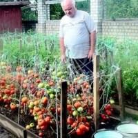 За едно лято ги подхранвам така 3 пъти: Доматите се превиват от плод чак до октомври