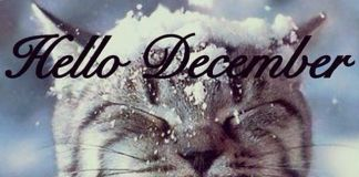 holiday-cheer-december-cat-weekender