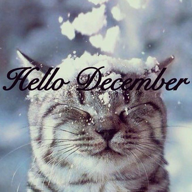 holiday-cheer-december-cat-weekender