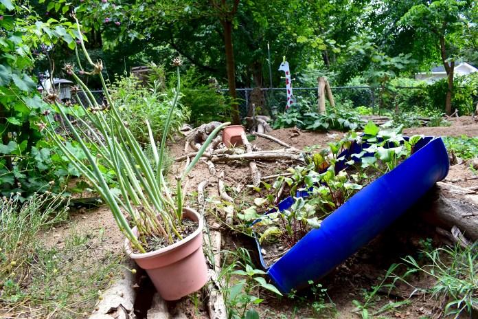 justin-sizemore-garden-beet-potato