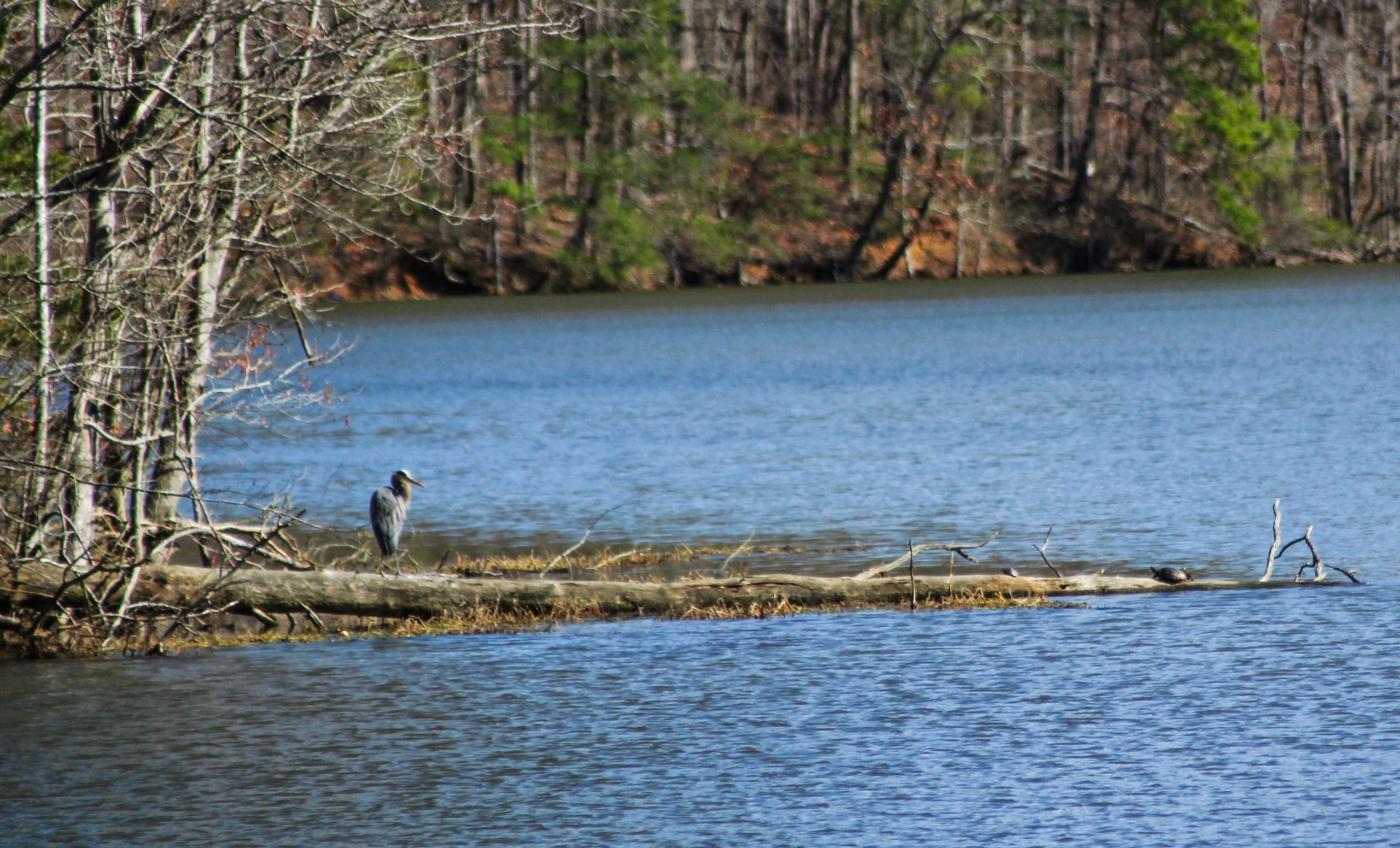 GALLERY: Back to nature at Salem Lake