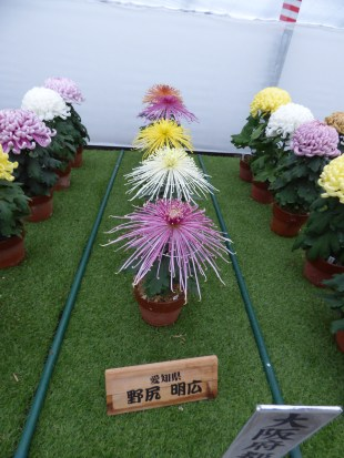 Mini-mum display! And a good excuse to include a spider mum (kudamono)
