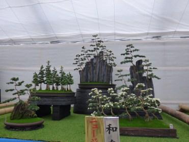 The stunning winning bonsai mum exhibit